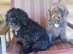Mabel & Eddie