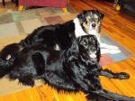Stella & Ringo
