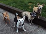 Max, Lola, Russell & Suri